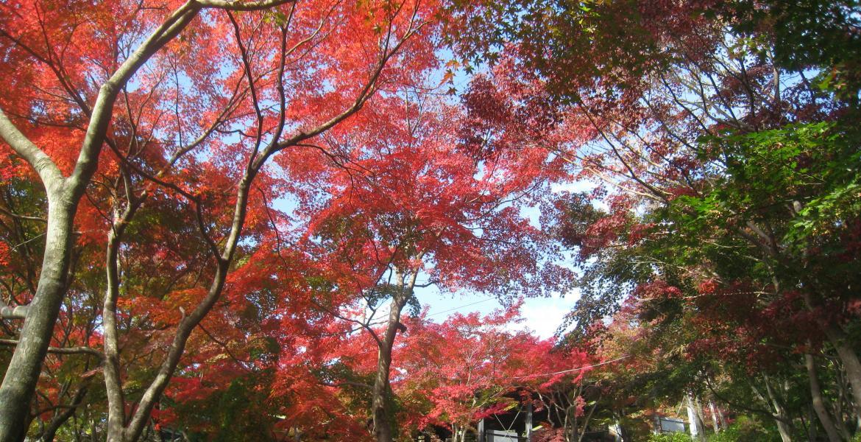 Tsukuba in Autumn