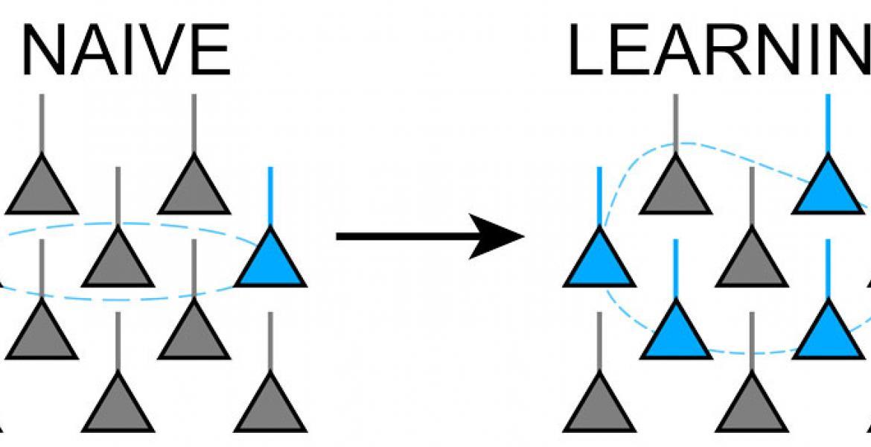 Olfactory learning in the zebrafish brain