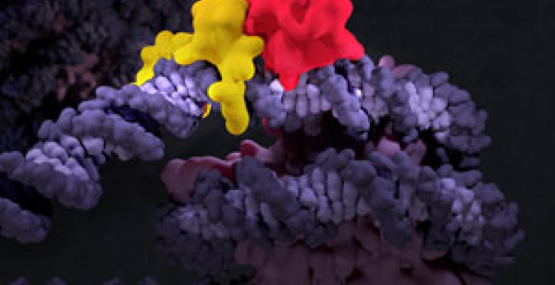 Chromatin fiber.