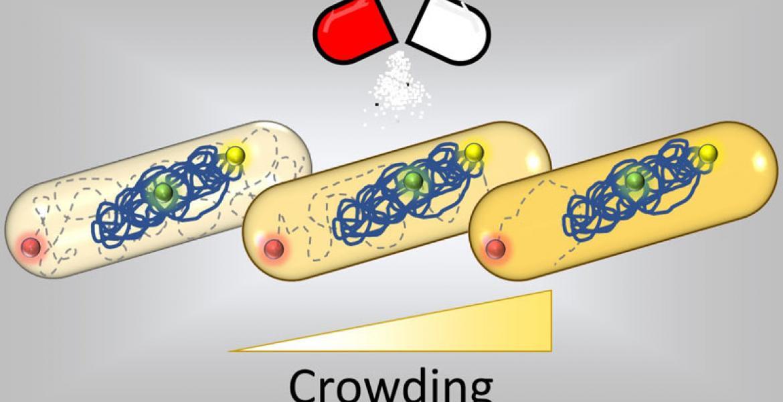 Antibiotics change intracellular dynamics through molecular crowding